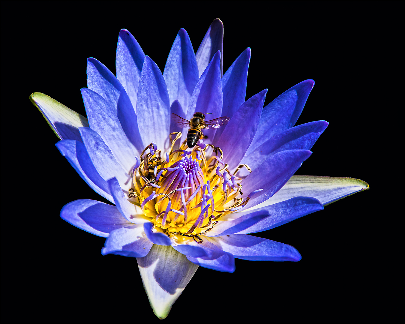 PS001-Water-Lilly-2-Desmond-Labuschagne