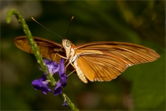 DS001-Butterfly-Karen-Donaldson