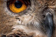 PS001-Owls-Eye-Andre-Stipp
