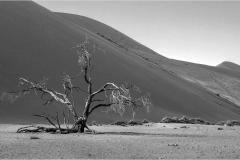 DS001-Lonely-tree-at-Sossus-NeelsBeyers