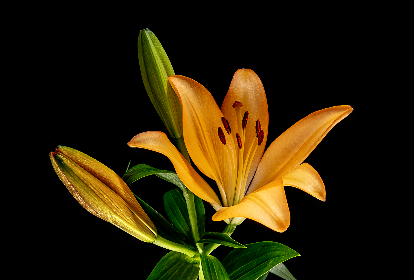 DS001-Lily-Rob Minter