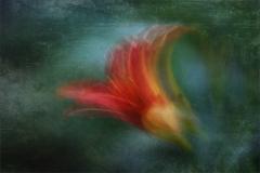 PS001-Flower Impressions-Lynne Kruger-Haye